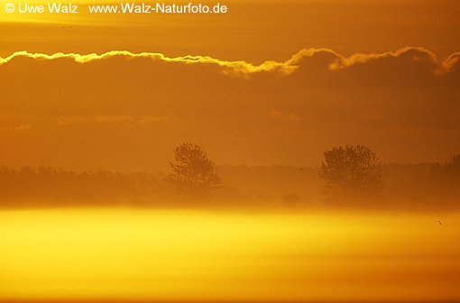 Morgenrot und Nebel NP Vorpommersche Boddenlandschaft / Sunrise in the morning mist