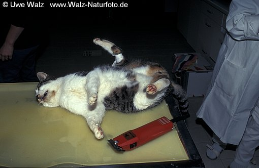 Tierarzt / Veterinarian surgeon