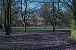 Krokusblüte Schloßgarten Husum / Crocus flowering time in Husum