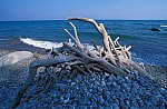 Alte Baumwurzel am Strand / Old tree root at the beach
