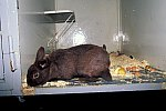 Tierheim - Hauskaninchen / Home for Animals - Rabbit
