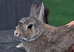 Tierheim - Zwergkaninchen / Home for Animals - Rabbit