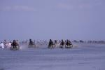 Duhner Wattrennen / Horse race in the mud flats