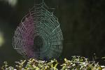 Spinnennetz, Spinnengewebe / Spiderwebs